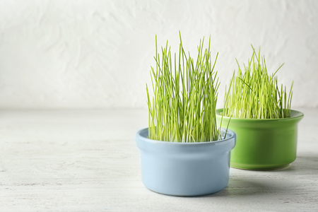 Bowls with sprouted wheat grass on white wooden table Stockfoto