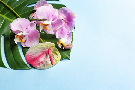 Beautiful tropical flowers with leaf on color background