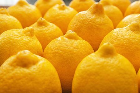 Ripe juicy lemons, closeup