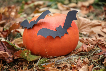 Halloween pumpkin with paper bats in autumn park 版權商用圖片