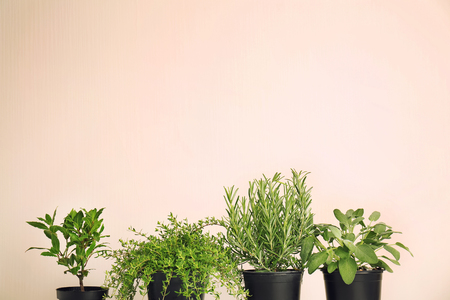 Pots with fresh aromatic herbs on light background