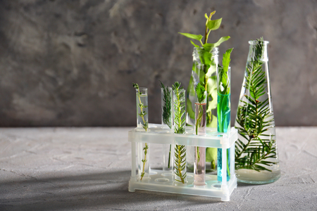 Test tubes and bottles with herbs on grey table 免版税图像 - 115149246