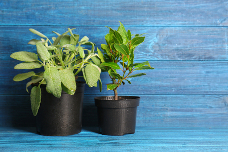 Pots with fresh aromatic herbs on color wooden background