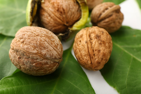 Unpeeled walnuts with green leaves, closeup