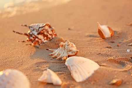 Sea shells on sandy beach Standard-Bild