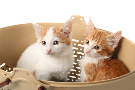 Cute little kittens in plastic basket on white background
