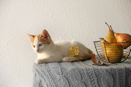 Cute little kitten near basket with pears on table