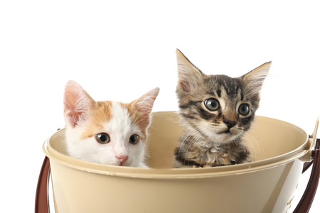 Cute little kittens in plastic bucket on white background Фото со стока