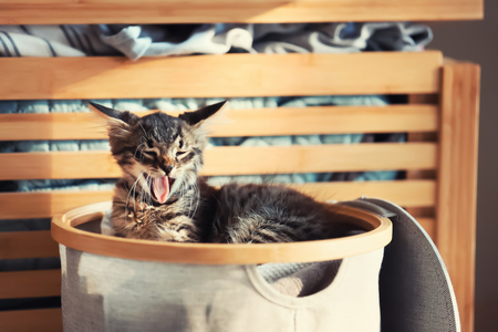 Cute little kitten in basket with dirty linen