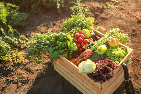 Wooden box with different vegetables in field Banco de Imagens