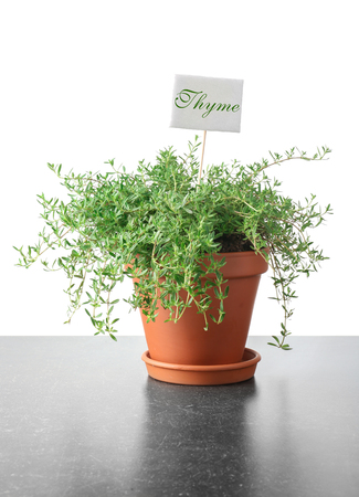 Pot with fresh thyme on grey table against white background