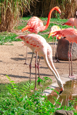 Beautiful flamingos in zoological garden Imagens