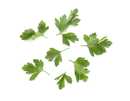 Fresh aromatic parsley on white background