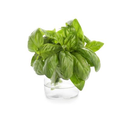 Jar with fresh aromatic basil on white background