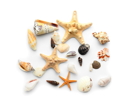 Set of sea shells and starfish on white background