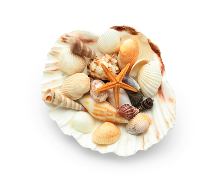 Set of different sea shells on white background