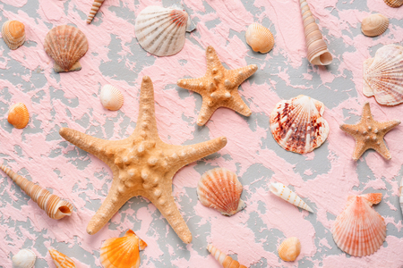Composition with different sea shells and starfishes on color background