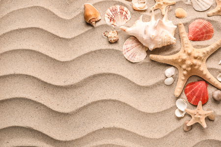 Composition with different sea shells and starfishes on sand Standard-Bild