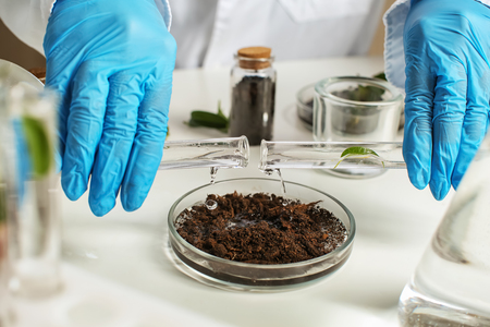 Scientist pouring water into petri dish with soil in laboratory Banque d'images