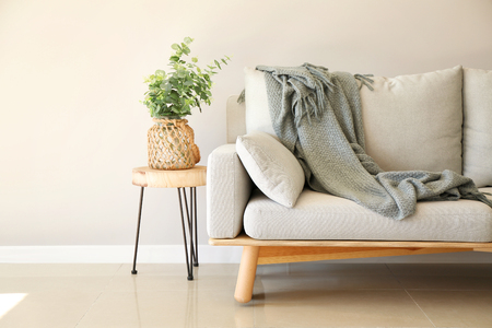 Interior of room in eco style with soft couch and green plant in vase