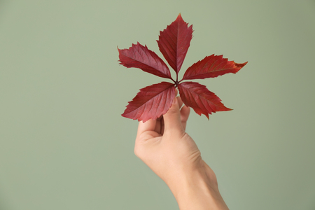 Female's hand with fresh leaves on color background. Ecology concept