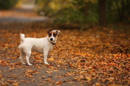 Cute funny dog in autumn park