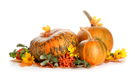 Whole fresh pumpkins with berries and flowers on white background 写真素材