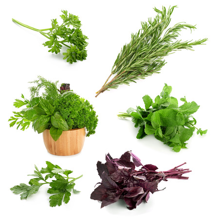Different fresh herbs on white background Reklamní fotografie