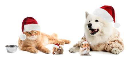 Cute pets in Santa hats on white background