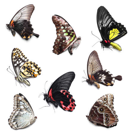 Collage of beautiful tropical butterflies on white background