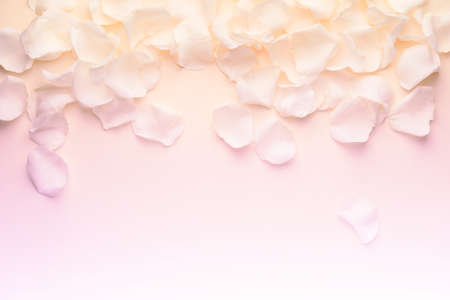 Beautiful rose petals on color background