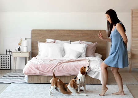 Young woman playing with cute dogs in bedroom at home