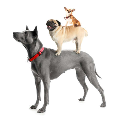 Cute dogs on white background