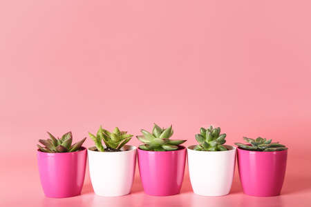 Pots with succulents and cacti on color background Stock Photo