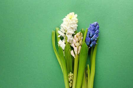 Beautiful hyacinth flowers on color background Stok Fotoğraf