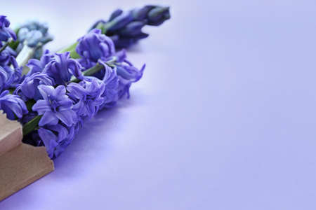 Bag with beautiful hyacinth flowers on color background, closeup