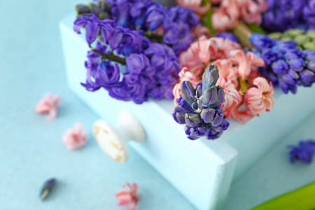Beautiful hyacinth flowers in box Stok Fotoğraf - 163658213