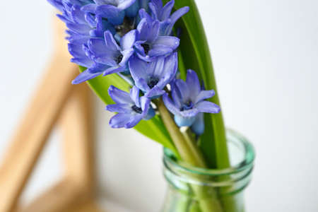 Bottle with beautiful hyacinth flowers, closeup