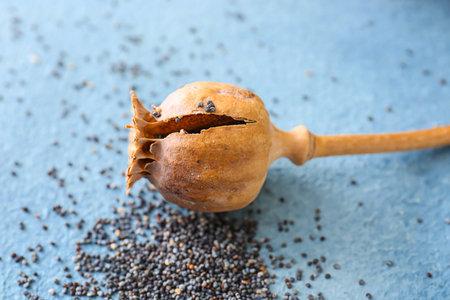 Dry poppy head on table Foto de archivo