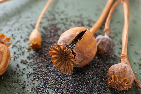 Dry poppy heads on table, closeup