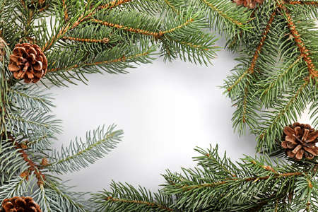 Frame made of fir tree branches on white background