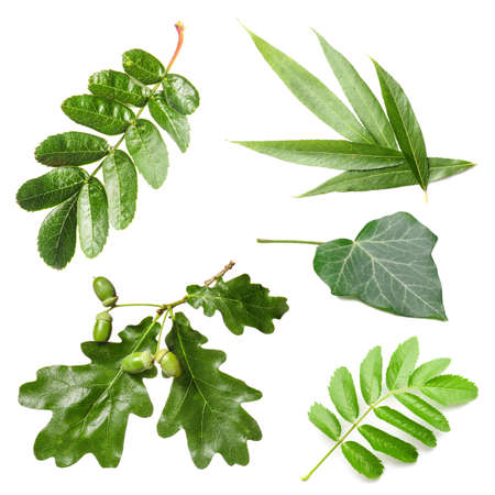 Different green leaves on white background