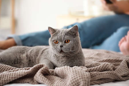Cute cat lying on bed at home 版權商用圖片