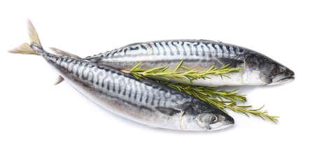 Raw mackerel fish with rosemary on white background