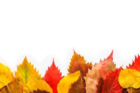 Beautiful autumn leaves on white background Archivio Fotografico