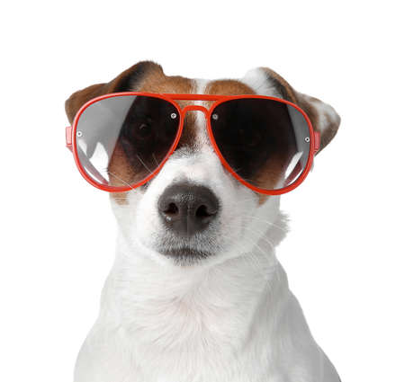 Cute Jack Russell Terrier with stylish sunglasses on white background