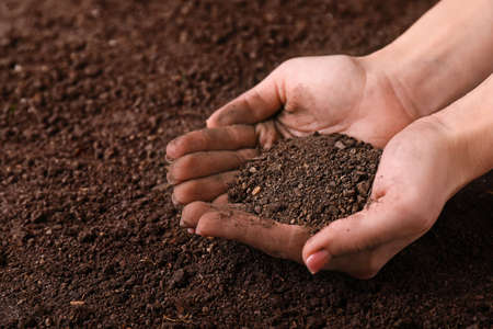 Female hands with brown soil