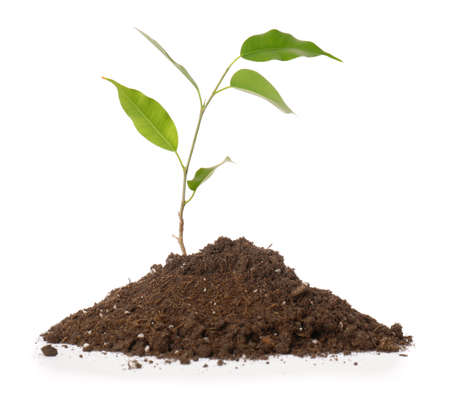 Green plant with heap of soil on white background