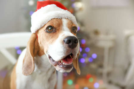 Cute dog with Santa hat in room decorated for Christmas