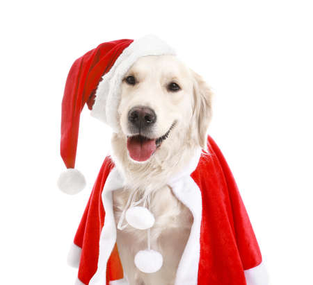 Cute funny dog in Santa costume on white background